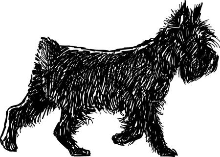 Vector sketch of a black terrier.