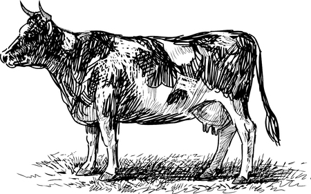 The sketch of a spotted cow.