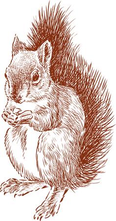 너트 먹는 다람쥐의 벡터 이미지.
