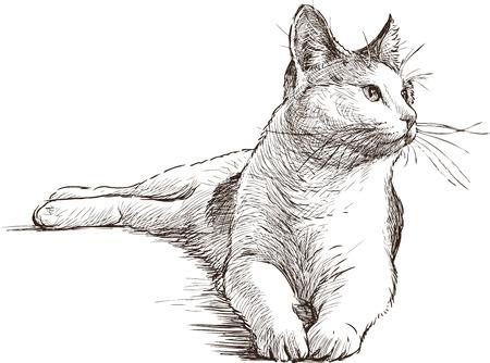 De schets van een liggende huiskat. Stock Illustratie