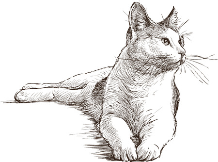 The sketch of a lying house cat. Illustration