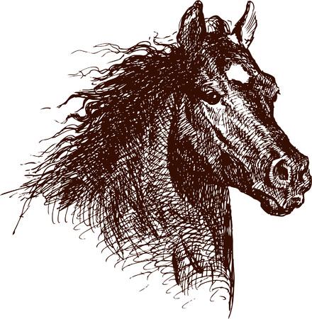 De vectortekening van een paard in stijl van een schets. Stock Illustratie