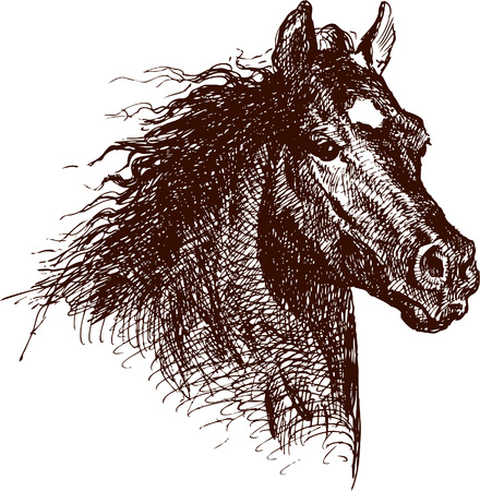 The vector drawing of a horse in style of a sketch.