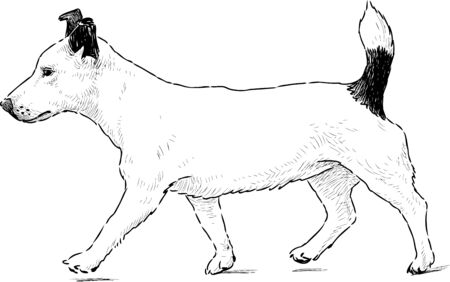 The image of a striding little dog.