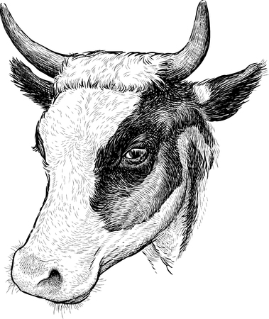 The vector image of the cow head.