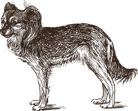 The vector drawing of a chihuahua dog. Illustration