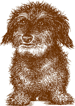 Vector drawing a shaggy dog in the style of the sketch. Illusztráció