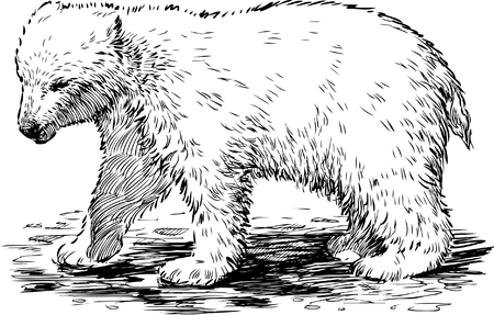 reserve: The vector image of a baby of a polar bear.