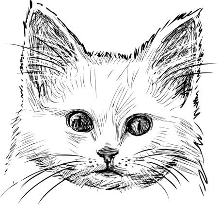 Vector sketch of a kitty head.