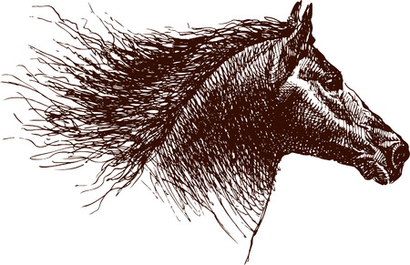 Vector die het hoofd van een paard in de stijl van de schets trekt.