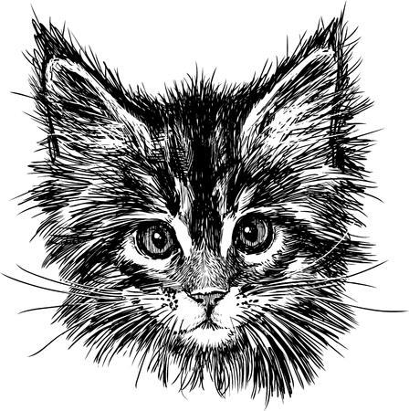 The vector drawing of the head of a cute kitten. Illusztráció