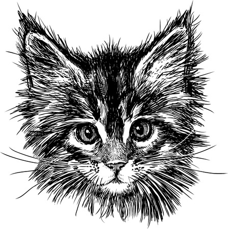 whiskers: The vector drawing of the head of a cute kitten. Illustration