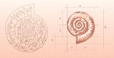 화석 mollusc- 노틸러스의 모델링의 드로잉을 벡터합니다. 일러스트