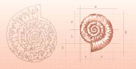 Vector drawing of a modelling of a fossil mollusc - nautilus. Illustration