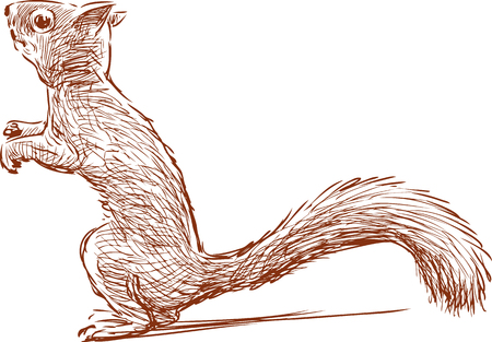 Vector sketch of a forest squirrel. Illustration