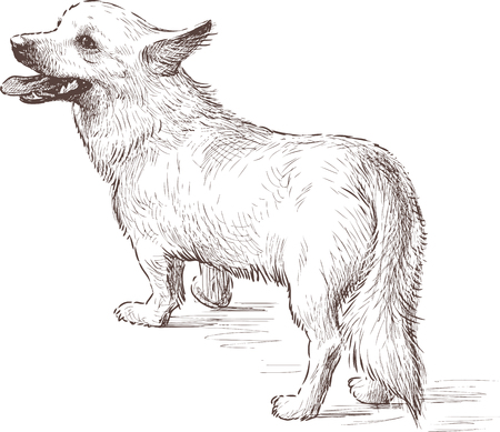 Vector sketch of a small dog.