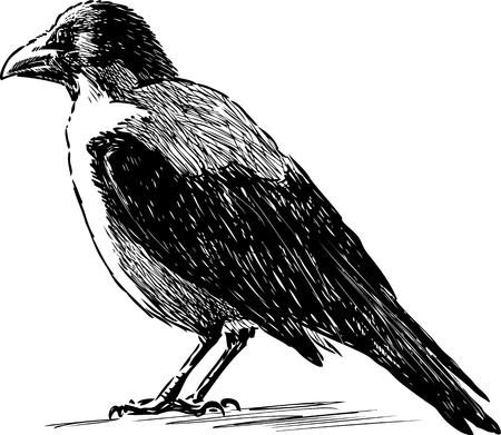 Sketch of a big crow. Иллюстрация