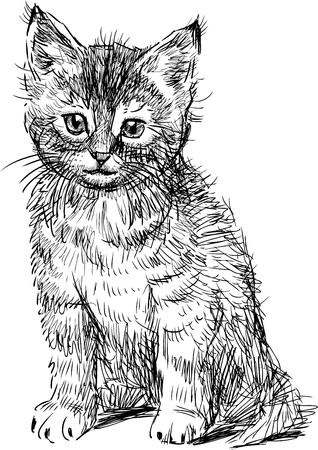 hairy legs: Vector sketch of a cute kitten.