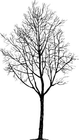 Vector drawing of the silhouette of a deciduous tree in the winter.