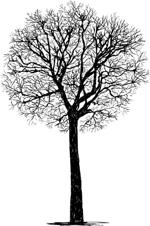 Vector drawing of the silhouette of a deciduous tree in the cold season.
