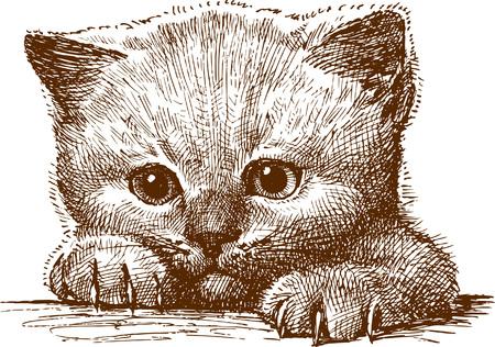 Le vecteur dessinant un petit chat. Banque d'images - 80108872