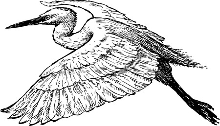 The vector drawing of a flying bird.