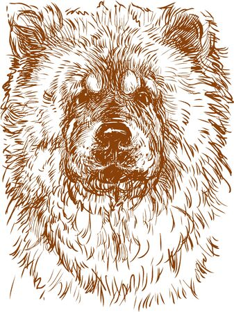 Vector image of the head of a chow-chow dog.