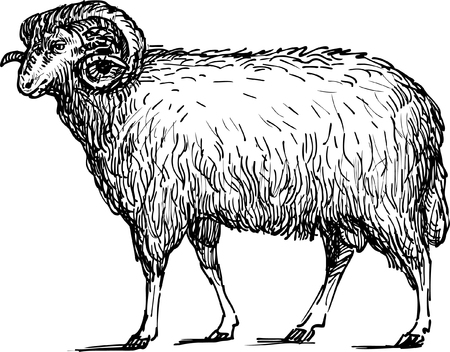 Vector drawing of a ram.