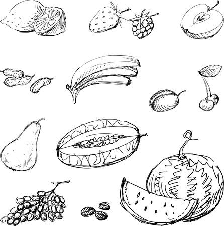 Vettore disegnato di vari frutti. Archivio Fotografico - 80108795