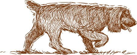 Vector drawing of a hunting spaniel.