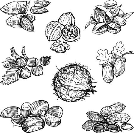 Vector drawing of various nuts. Illustration