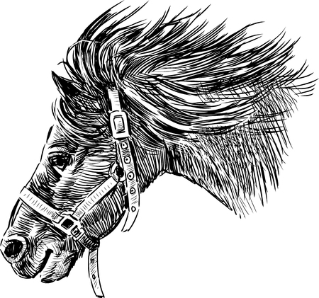 Vector sketch of the horse head. Çizim