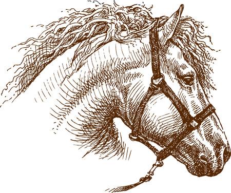 Vector drawing a horses head.