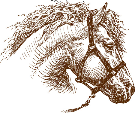 Vector drawing a horse's head. 版權商用圖片 - 80108808