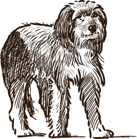 Vector sketch of a funny lap dog.