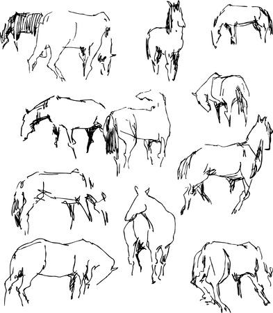 Vector doodles of the grazing horses.
