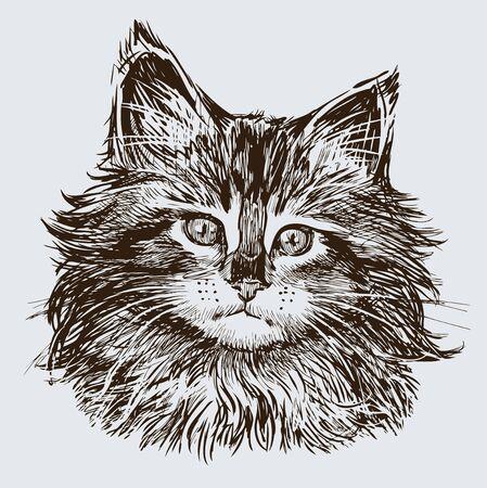 벡터 이미지 집 고양이의 초상화입니다.