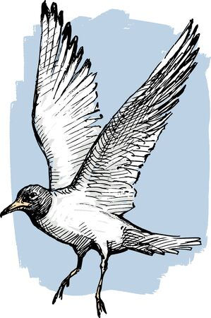Vector image of a seagull