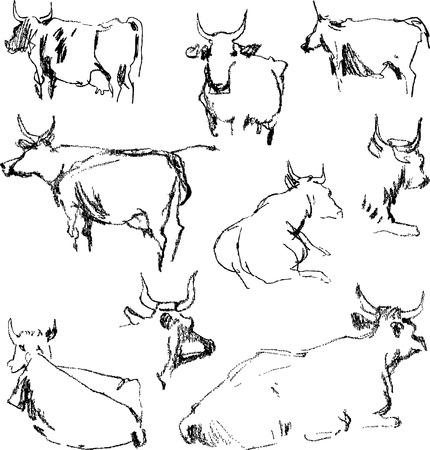 Vector image cows