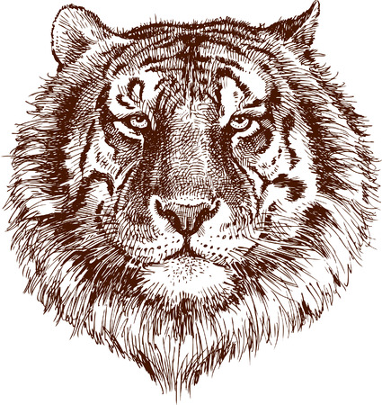 The vector drawing of the tiger head. Ilustração