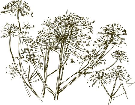 Vector sketch of the umbrella grass.