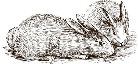 Croquis vectoriel des lapins domestiques. Banque d'images - 80897775
