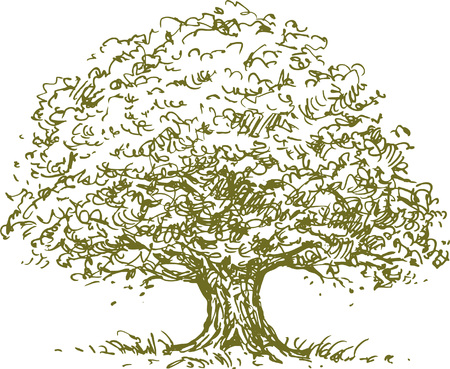 The vector sketch of an oak tree. Illusztráció