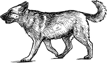 Sketch of a guard dog.