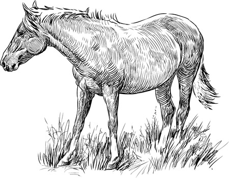 Vector drawing of a grazing horse.