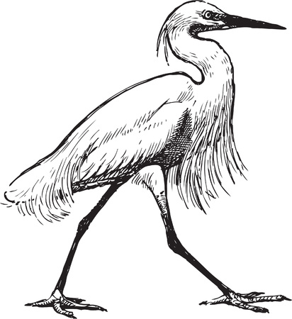 The vector drawing of a striding heron. Illustration