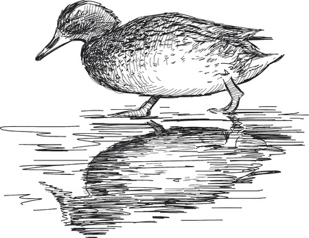 A duck walks on the coast Illustration
