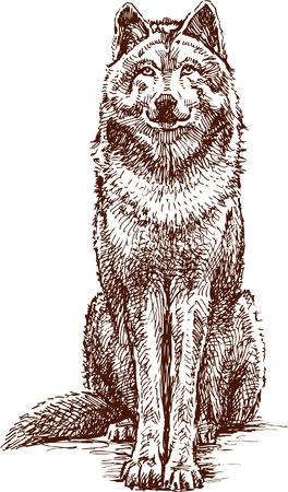 The vector drawing of a wolf.