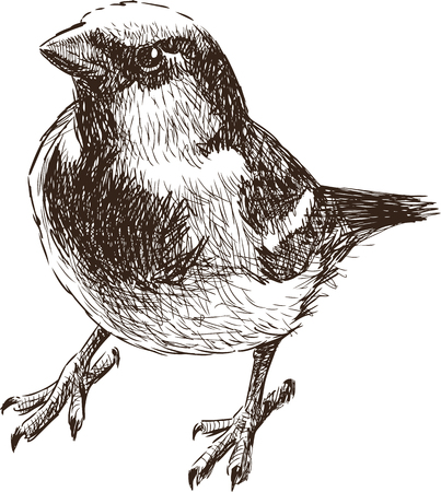 The drawing of a little sparrow. Illustration