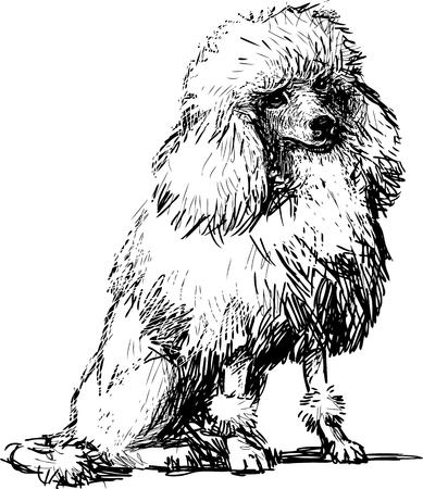 Vectortekening van een witte poedel. Stock Illustratie